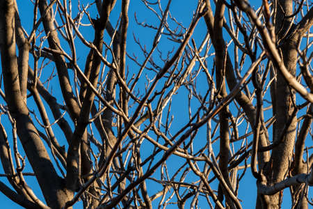 Young branches against blue sky in winter time. Nature 版權商用圖片