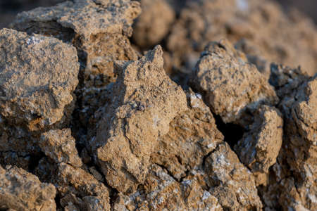 Close up soil texture background, Organic gardening, agriculture