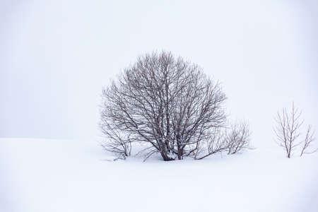 lonely tree in the snow, beautiful landscape Reklamní fotografie