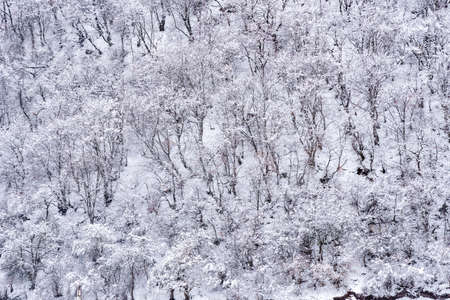 Snow on the branches of trees after a snowfall. Beautiful winter background Reklamní fotografie