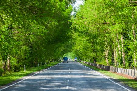 Asphalt road through green swamp trees, highway in Georgia Standard-Bild