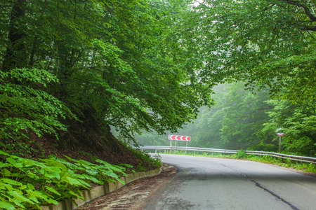 Sabaduri forest in summer, a beautiful place in the north of Tbilisi. Landscape