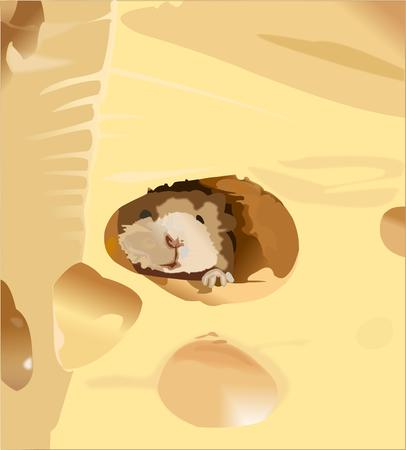Mouse, cheese, Roquefort cheese