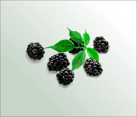 black berry: Blackberry