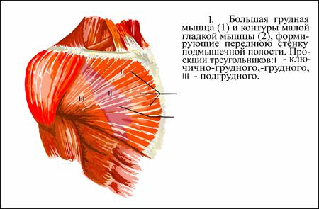 lymph: Human anatomy , Pectoralis major muscle