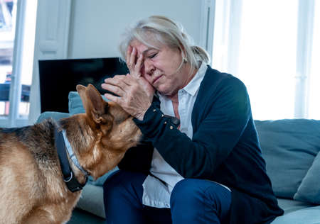 Depressed senior old woman crying on couch with pet dog as only Companion. Sad and tired widower amid COVID-19 pandemic. Coronavirus death, lockdown, social distancing and Mental health. Banque d'images