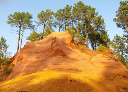 Ochre cliff with pine trees