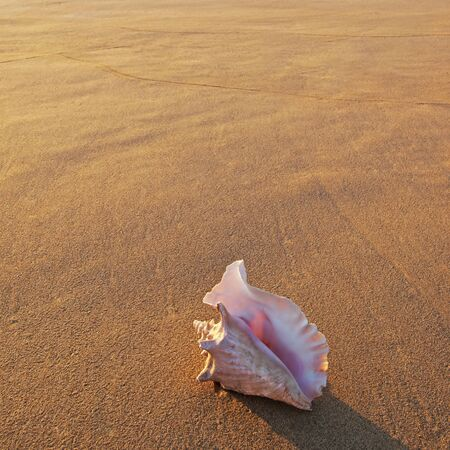 Shell in setting sun