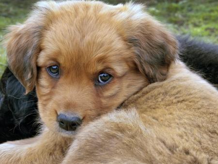 子犬の目 写真素材