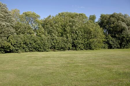 backyard lawn surrounded with trees Stock Photo