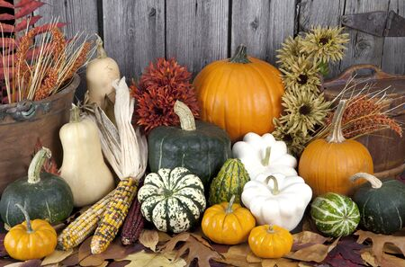 squash, pumpkin & gourd collection Stock Photo
