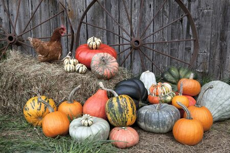 a variety of pumpkins in front of barn