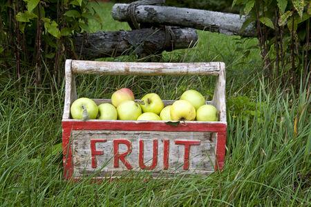Golden delicious apples in fruit box Zdjęcie Seryjne