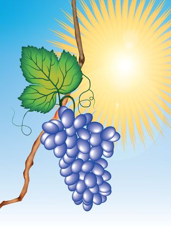 curled up: Hanging bunch of grapes