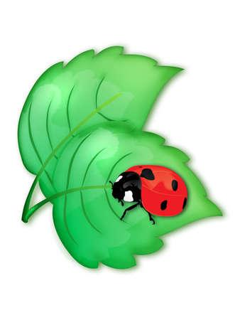 Ladybird on a green leaf photo