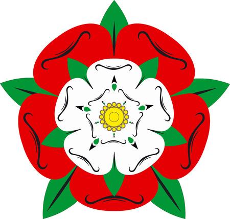 english rose: Tudor rose - Illustration