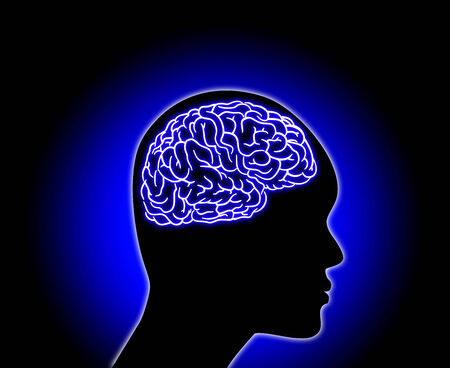 Human Brain - Stock Illustration on color background Stock Photo