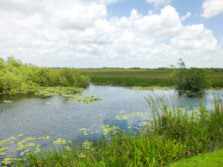 sawgrass: Everglades National Park