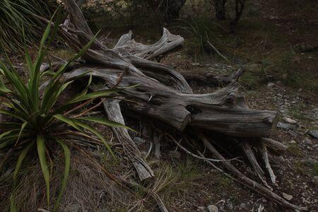Yucca and Log Imagens