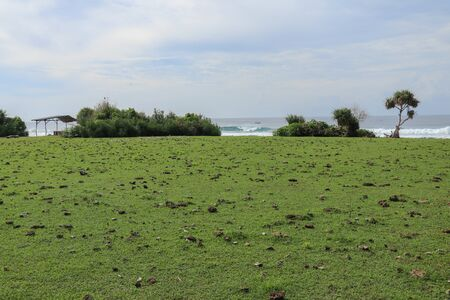 Green pasture with many cow shit at Nyang Nyang beach on Bali island, Indonesia. Green meadow off the coast of the Indian Ocean. In the background the sea with high waves breaking off the coast. Reklamní fotografie