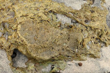 Fossilized sea animal on coast of Indian Ocean, Bali, Indonesia. Structure of sea coral fossil of yellow black color. Water in small recesses of coral. Sun's rays are reflected from the water surface. Imagens