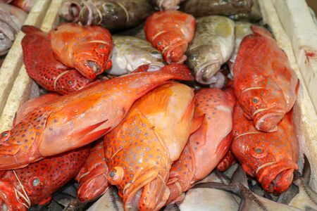 Fresh seafood on ice at the Jimbaran fish market. Fresh fish Red Grouper selling in the fish market in Jimbaran. Red fresh fish for sell in Pasar Ikan Kedonganan. Exotic fishes in traditional market. Foto de archivo