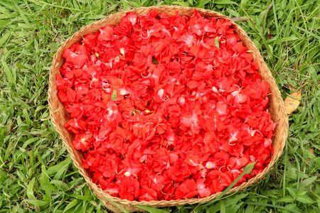 Red Impatiens balsamina. Red flowers of Impatiens Balsamina in a wicker basket. Bunga Pacar Air is used by Hindu believers in Bali as offerings to the gods. 版權商用圖片