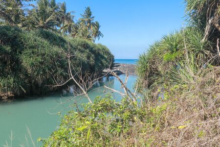Rainwater in the river flowing into the ocean. Tropical flora lining the river bed. Green water in the river and blue water in the sea.