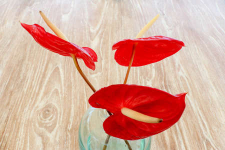 Red flamingo flowers, boy flowers in the glass vase place in the outdoor table. Red Calla.