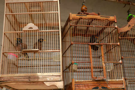 Bird cages for sale in the market, Bali, Indonesia