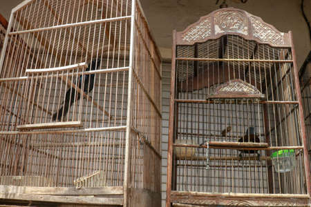 Litle birds in the cage. Java, Indonesia. Freedom concept