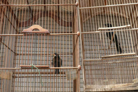 Litle birds in the cage. Java, Indonesia. Freedom concept Stock Photo