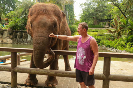 Domesticated elephant at ZOO. A middle-aged tourist strokes an elephant trunk. Man near the elephant in the Safari Park on the Bali island