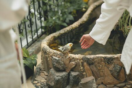 The guy holds out his hand to a beautiful little parrot on the background of an artificial pond. The young man wants to touch the bird.