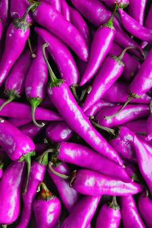 Purple background or texture of chili peppers.