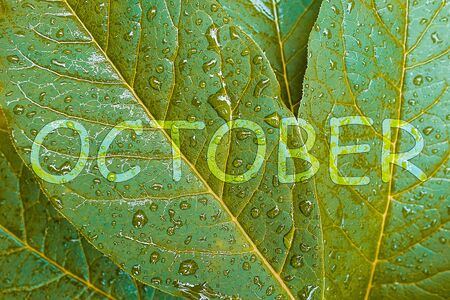 The word October on a background of yellowing leaves with raindrops. The concept of autumn and rainy weather. Stok Fotoğraf