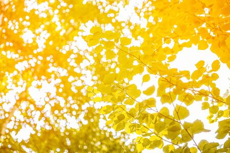 Yellow autumn leaves on branches against the sky. Stok Fotoğraf