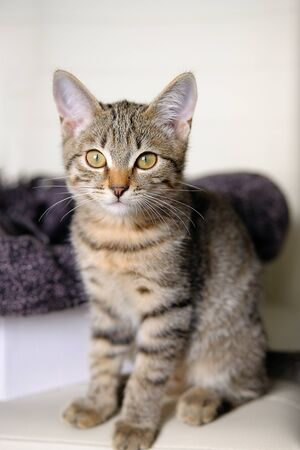 Striped cute sad brooding gray kitten, surprised looks to the side. Pets and lifestyle concept. Stok Fotoğraf - 133141815