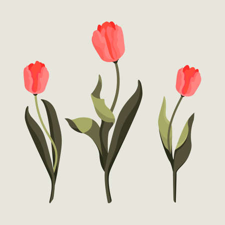 A pack of three drawn tulips. Nature 向量圖像
