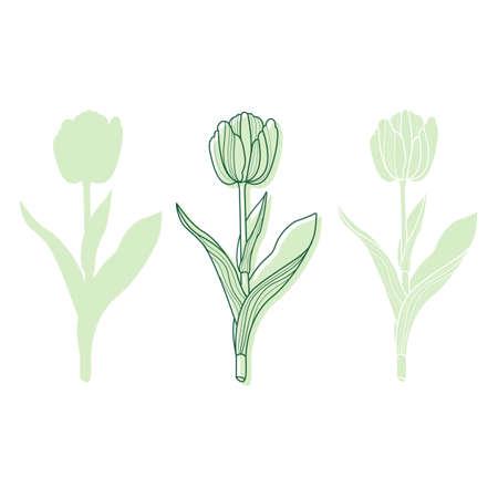 Set of hand drawn tulips. Nature 向量圖像