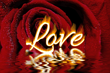 Love word written in flames, on dark red rose and water dew drops background with water reflection, love concept for valentines day