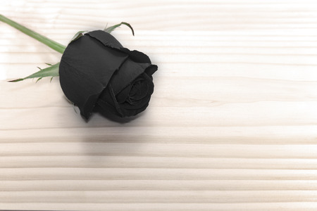 black rose on wooden table, love concept for valentines day