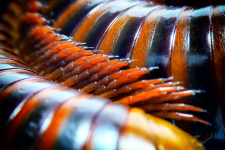 close up of the millipede legs., shallow depth of field and selective focus. Banco de Imagens