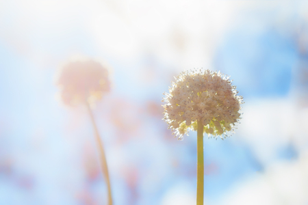Beautiful soft focus flower with morning sunlight background., wallpaper made with color filters effect., soft sparkle pastel color.
