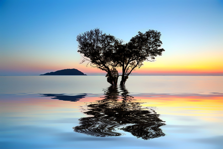 Alone dead tree in the shape of heart and partially submerged in the sea with water reflection on sunset., the concept of lonely, sadness, depressed and broken heart.
