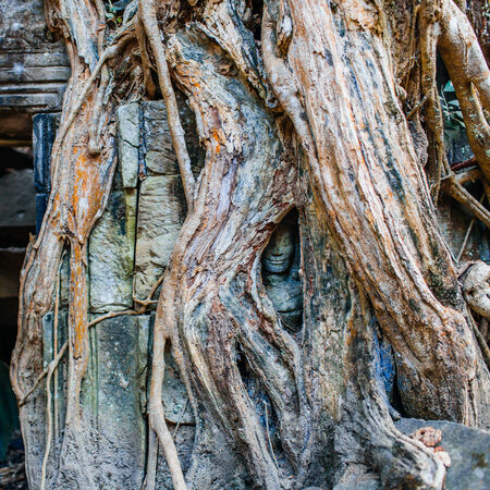 Face in ancient temple Ta Prohm, Siem Reap, Cambodia photo