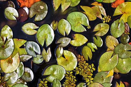 flora: Swamp flora Stock Photo