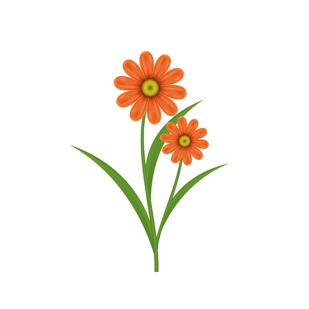 Chamomile flower on a white background. Isolated vector illustration.