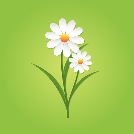 Chamomile flower on green background. Isolated vector illustration.