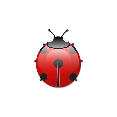Ladybird on white background. Isolated vector illustration.
